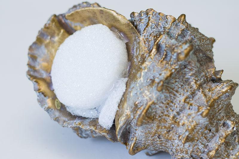Coastal-Succulent-Shell-3-1