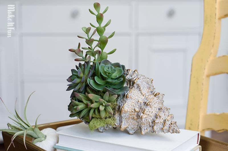 Coastal-Succulent-Shell-6-1