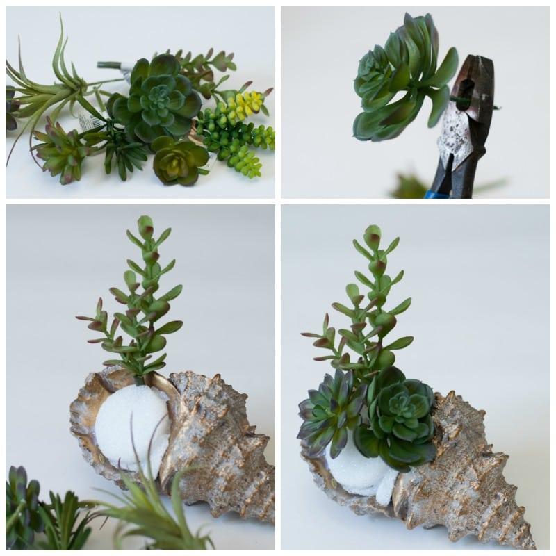 Succulent-Shell-2