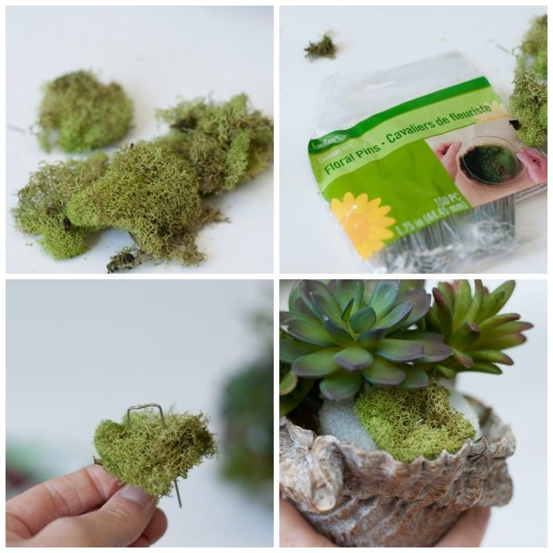 Succulent-shell-1-1