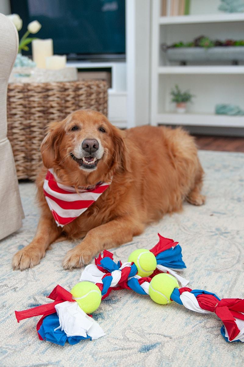 How to Make Dog Toys from Bandanas: DIY Dog Toy - Darice | Blog 2